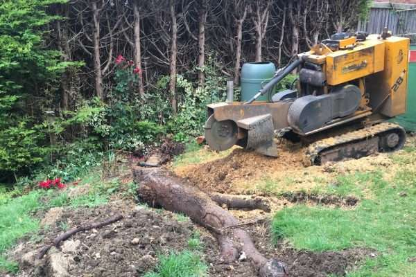 treestumper - tree stump removal website