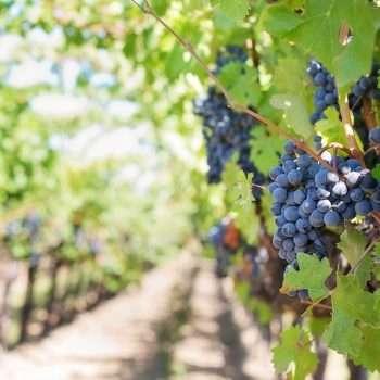 Wings Wines - Wine Imports Wordpress Website